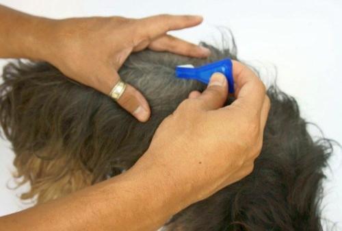 Antiparasitarios para el control y la prevenci n el blog - Pipeta advantix despues bano ...