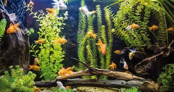 acuario para principiantes