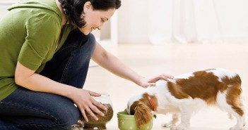 Perro comiendo: las decisiones del propietario influyen en la salud de sus perros