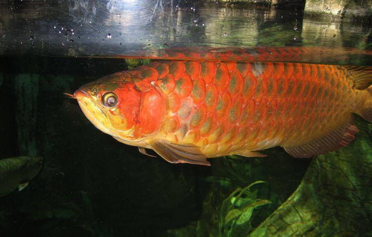 La mala suerte y los peces mito o realidad - Los peces traen mala suerte ...