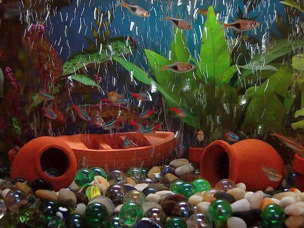 Las claves de la decoraci n del acuario marino - Decoracion acuario marino ...