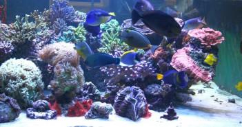 Cómo empezar con la acuariofilia marina en nuestro comercio