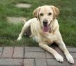 el verano y los perros