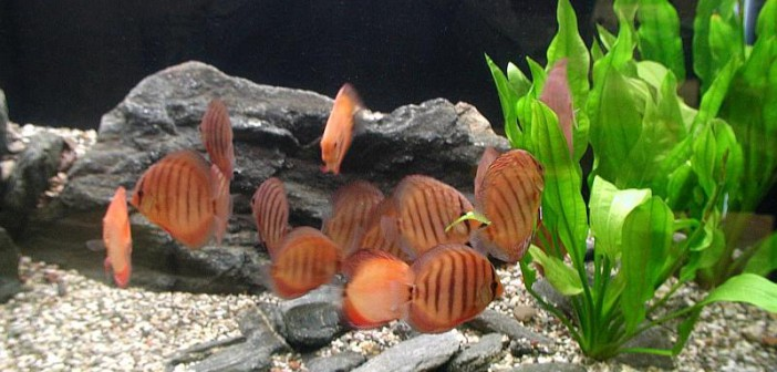 8 consejos para ofrecer peces sanos