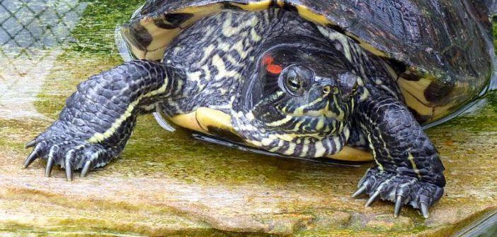 Especies exóticas y especies invasoras