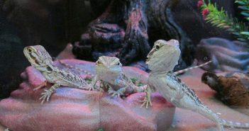 reptiles-en-la-tienda