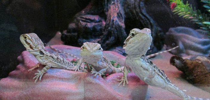 La correcta alimentación de reptiles en la tienda