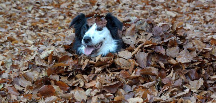 ¿Cómo está actualmente el mercado británico de mascotas?