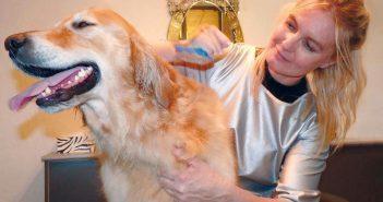 Perro con pulgas en la peluquería