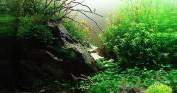 La decoración del acuario: piedras, rocas, troncos, raíces, fondos y suelos