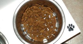 La alimentación especializada para mascotas