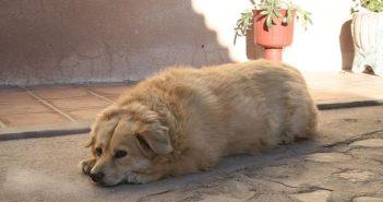 Alimentos light para mascotas