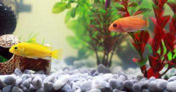 Lo que hay que saber para mantener la calidad del agua en los acuarios