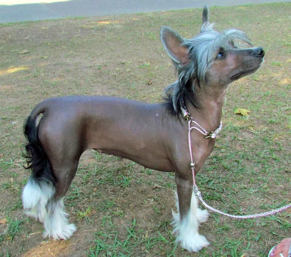 crestado peluqueria canina en invierno
