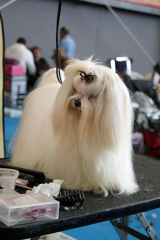 maltes peluqueria canina en invierno