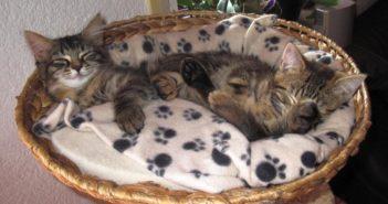 El auge de los artículos para gatos en el comercio especializado