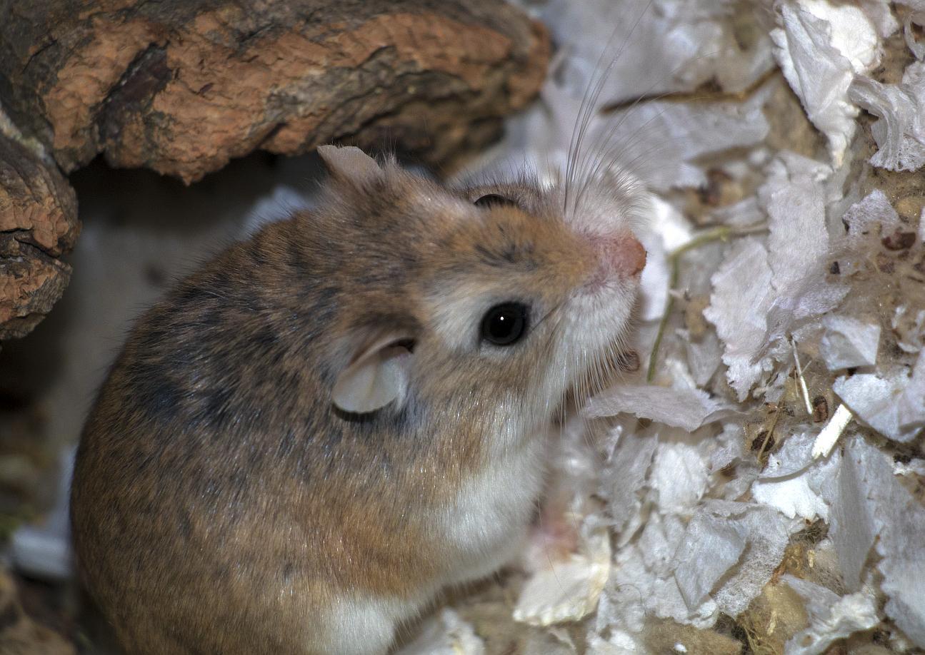 antiparasitarios hamster