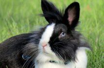 Antiparasitarios para pequeños mamíferos