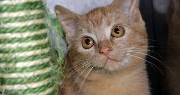 ASAC informa: el trabajo del comercio especializado por el bienestar animal