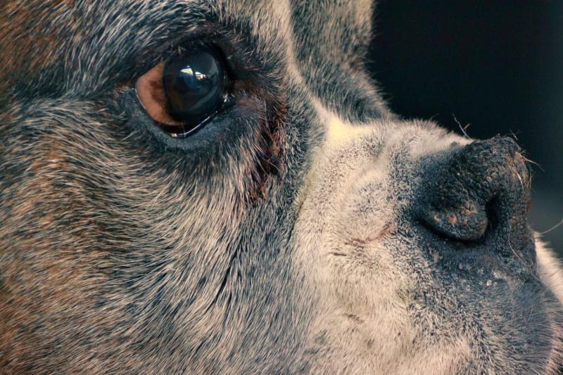 cuidados perros mayores