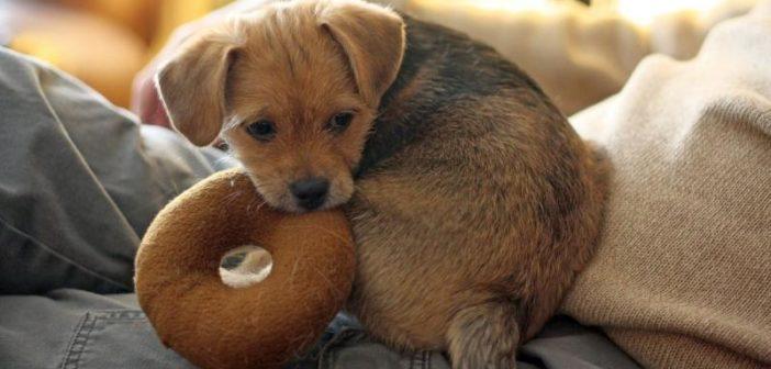 Juguetes para mascotas: consejos a los propietarios