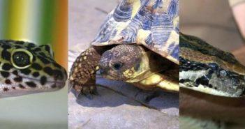 La reproducción en reptiles