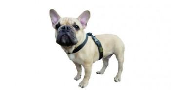 Arneses, correas y collares para perros, ¿qué escoger?