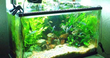 Filtros biólogicos en los acuarios