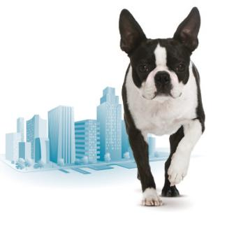 perro urban
