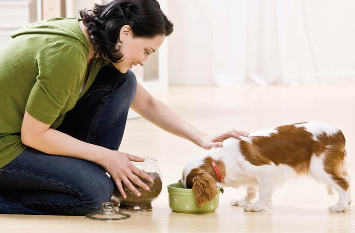 Alimentación y piel sana en las mascotas