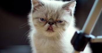Gestión de las reclamaciones. Angry cat