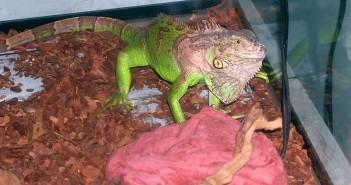 Alimentacion de reptiles en los comercios