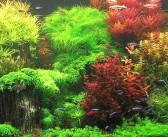 4 acciones para prevenir enfermedades en plantas de acuario