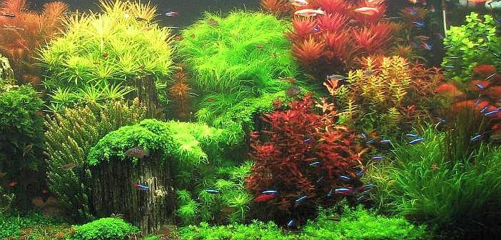 Macetas en las plantas acuario