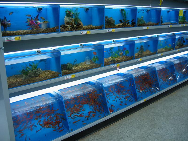 C mo preparar la llegada de nuevos peces a la tienda for Peces que no necesitan oxigeno
