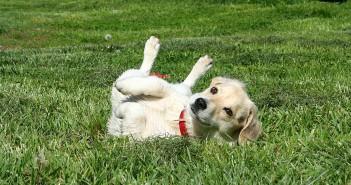 El calor y los parásitos en perros y gatos