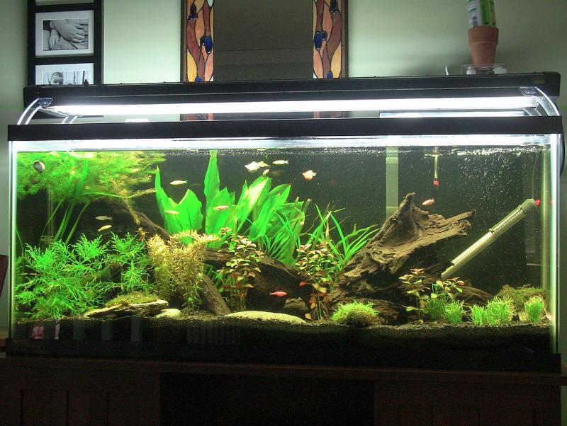 apagon acuario 2