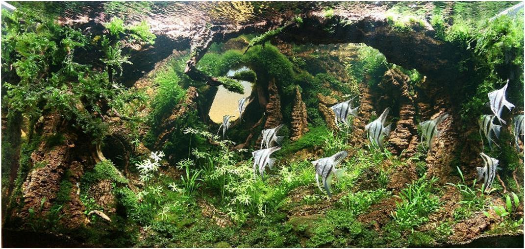 acuario iberzoo