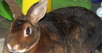 Claves para cuidar conejos en la tienda de mascotas