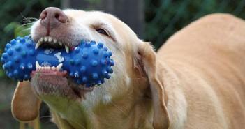 Juguetes para perros y gatos: el mejor entretenimiento