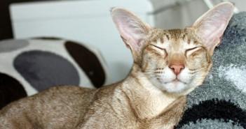 Artículos y complementos para gatos