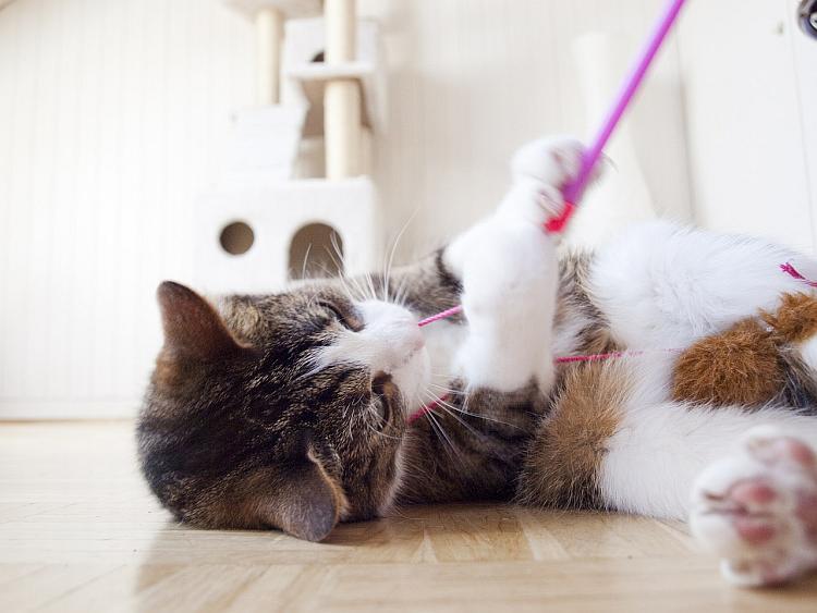 articulo gato 3