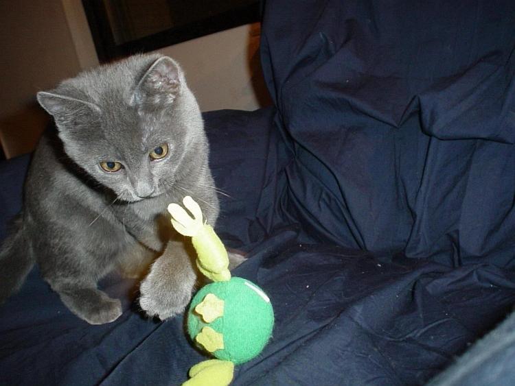 articulo gato