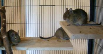 Cuida el hábitat de los pequeños mamíferos en tu comercio