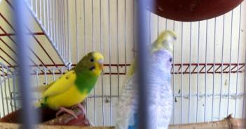 Aves en cautividad