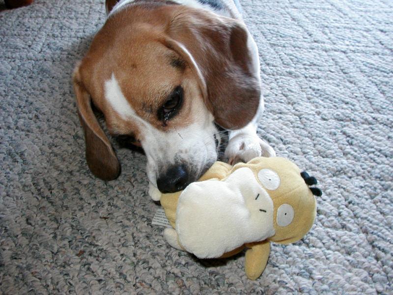 Juguetes para mascotas: peluche