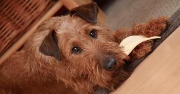 ¿Cómo afecta la nutrición a la salud de la piel de perros y gatos?