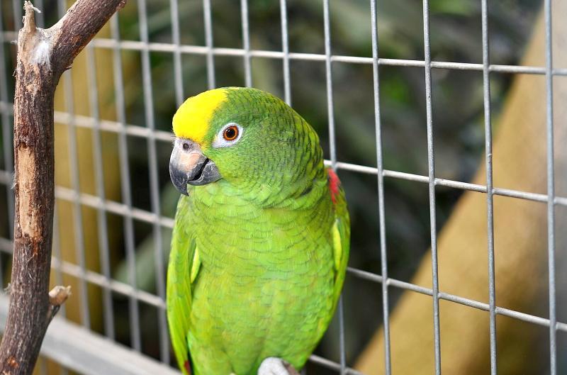 complementos y jaulas para aves