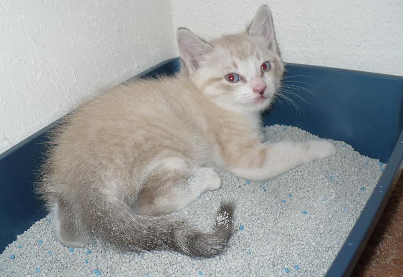 cuidados gato arena