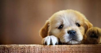 Guía para los nuevos propietarios de perros